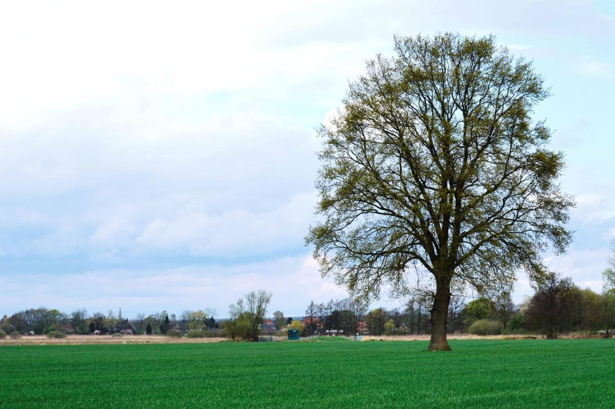 Gegend mit Baum