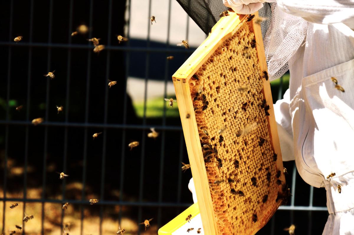 Fliegenden Bienen