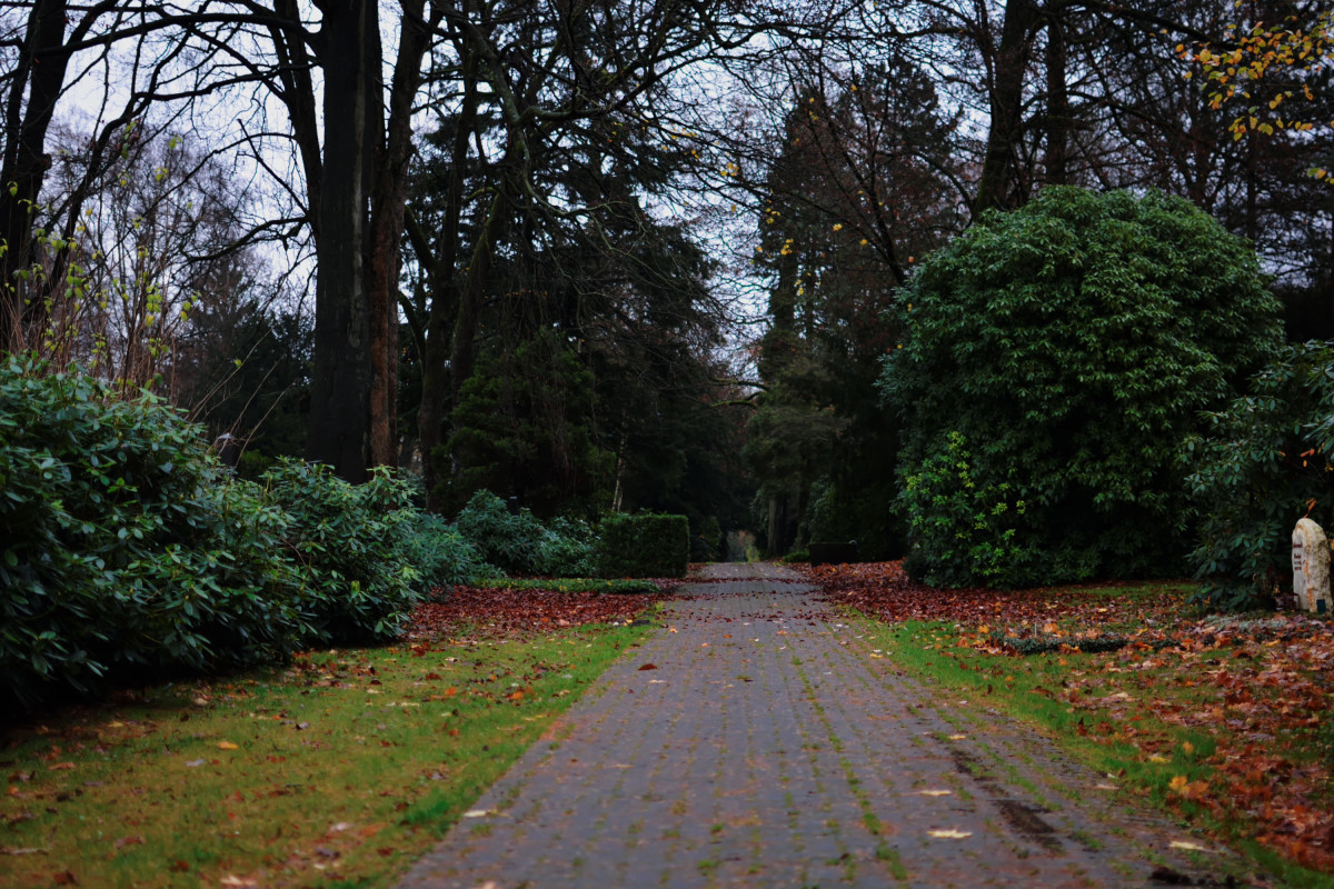 Weg auf dem Ohlsdorfer Friedhof